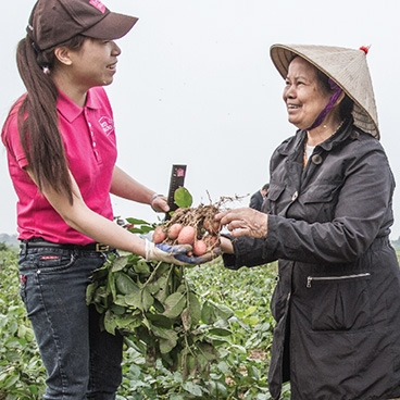 Vitalising the Vietnamese potato sector